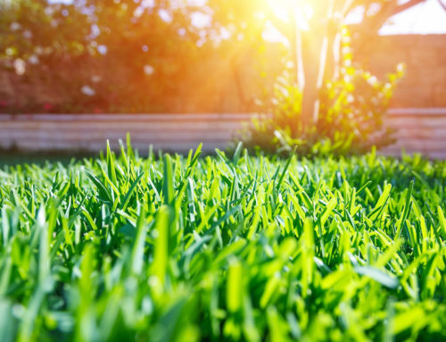 What Grass Goes Best in Your Backyard